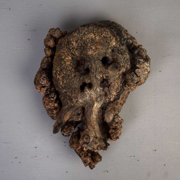 Elephant Man – Piren Kökü Duvar Dekoru